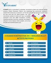active protein Brochure