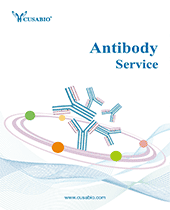 Antibody Service Brochure