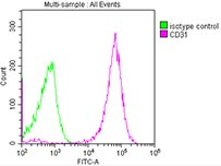 Overlay histogram of  NES antibody