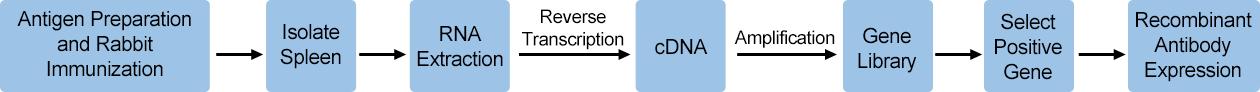 production process of Cusabio custom recombinant antibody
