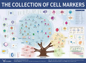 Cell Markers