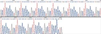 Gene Synthesis case {GCTTCCCCCTG}10