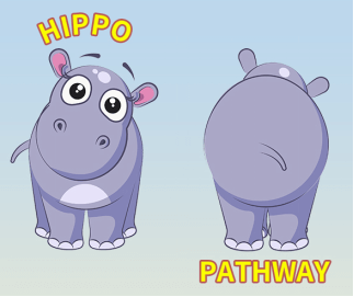 The Overview of Hippo Signaling Pathway