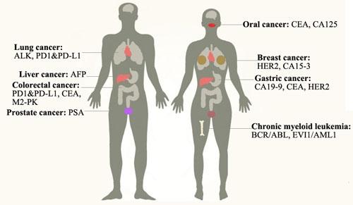 Abdominal cancer tumor markers. Formular de căutare