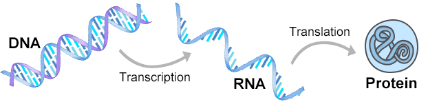 Production of Recombinant Protein