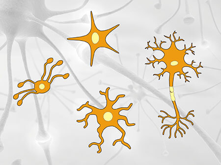 Do You Really Known Neurons and Glia Cells in Nerve System?