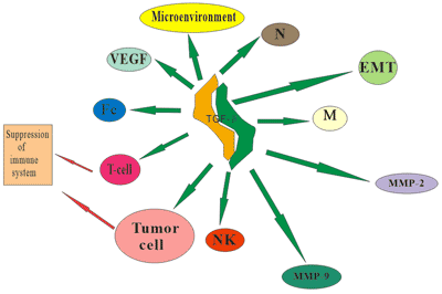 TGF-β promotes the invasion and metastasis of tumor cells.