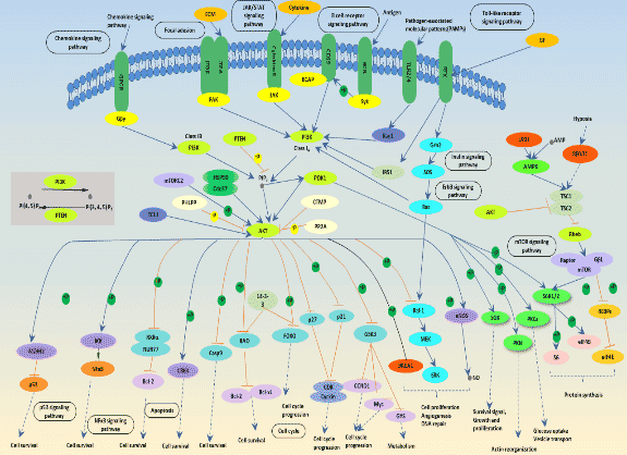 PI3K-Akt Signaling Pathway and Cancer