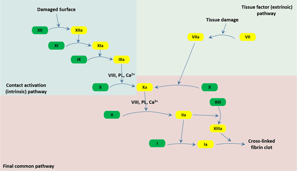 The three pathways that makeup the classical blood coagulation pathway