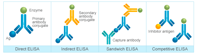 Four different types of ELISA: direct ELISA, indirect ELISA, sandwich ELISA and competitive ELISA