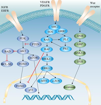 Signaling pathways involved in the pathogenesis of hepatocellular carcinoma