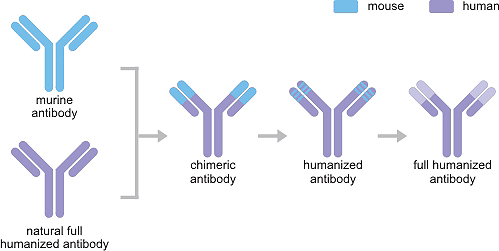 The Development of Recombinant Antibody