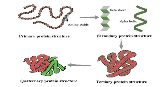Biological Activity Of Proteins