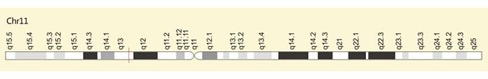 The location of CD44 gene