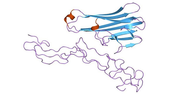 Structure of the soluble human 55 kd TNF receptor-human TNF beta complex
