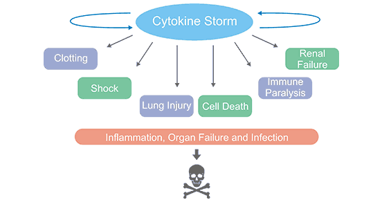 Cytokine Storm Causes Direct Organ Injury