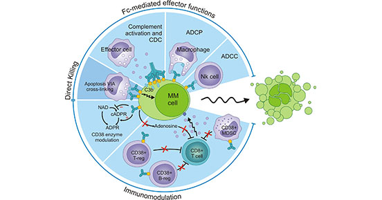 CD38 signaling pathway in the solid tumors