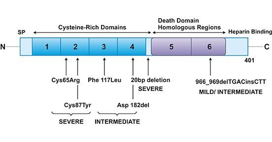 OPG mutations in Juvenile Paget's disease