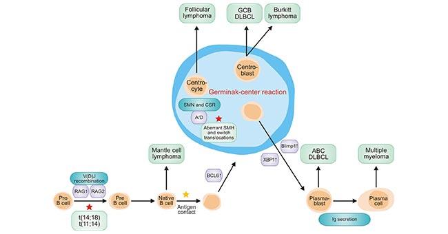 Non-Hodgkin's Lymphoma, One of Common Heterogeneous Malignant Tumors