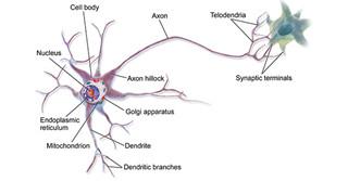 Neuronal Markers and Neurodegenerative Diseases