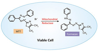 The Overview of Cell Viability