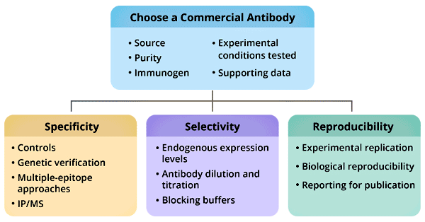 How to choose a commercial antibody
