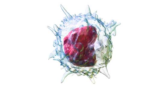 3D Rendering of a Monocyte