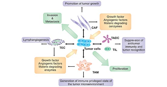 The components of tumor microenvironment and its relationship of cancer