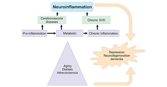Sources of neuroinflammation