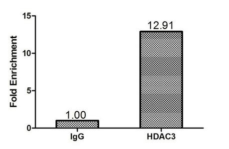 Chromatin Immunoprecipitation(ChIP) - HDAC3 Antibody