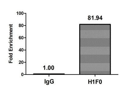 Chromatin Immunoprecipitation(ChIP) - Mono-methyl-H1F0 (K101) Antibody