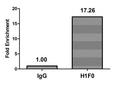 Chromatin Immunoprecipitation(ChIP) - H1F0 (Ab-101) Antibody
