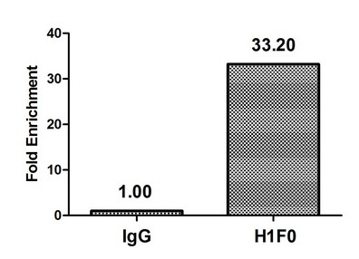 Chromatin Immunoprecipitation(ChIP) - Mono-methyl-H1F0 (K81) Antibody