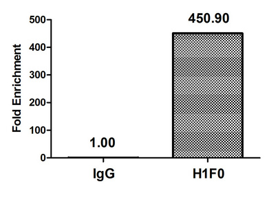 Chromatin Immunoprecipitation(ChIP) - H1F0 (Ab-81) Antibody