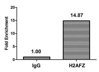 Chromatin Immunoprecipitation(ChIP) - Mono-methyl-H2AFZ (K4) Antibody
