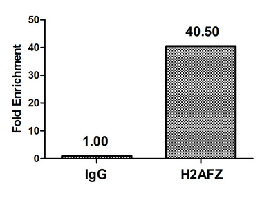 Chromatin Immunoprecipitation(ChIP) - H2AFZ (Ab-4) Antibody