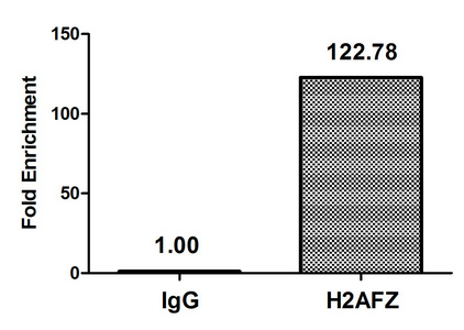 Chromatin Immunoprecipitation(ChIP) - Acetyl-H2AFZ (K7) Antibody