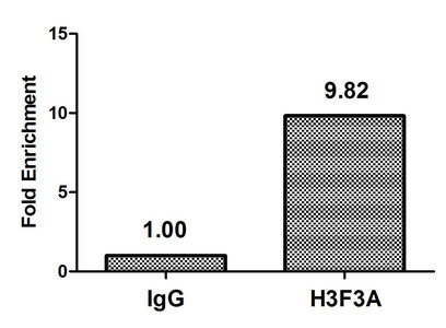 Chromatin Immunoprecipitation(ChIP) - H3F3A (Ab-79) Antibody