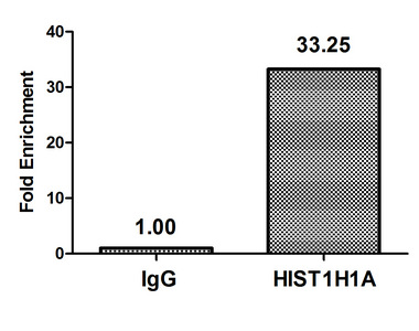 Chromatin Immunoprecipitation(ChIP) - HIST1H1A (Ab-21) Antibody