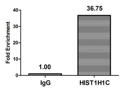Chromatin Immunoprecipitation(ChIP) - HIST1H1C (Ab-45) Antibody
