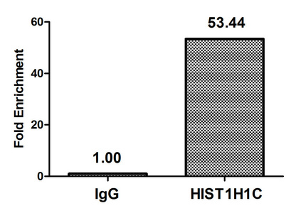 Chromatin Immunoprecipitation(ChIP) - HIST1H1C (Ab-96) Antibody
