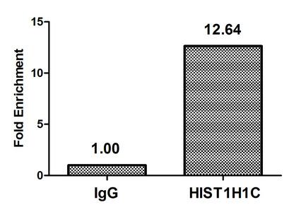 Chromatin Immunoprecipitation(ChIP) - Crotonyl-HIST1H1C (K158) Antibody