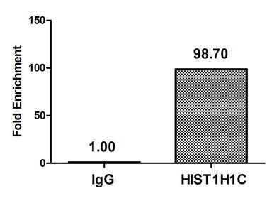 Chromatin Immunoprecipitation(ChIP) - HIST1H1C (Ab-16) Antibody