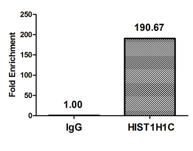 Chromatin Immunoprecipitation(ChIP) - Mono-methyl-HIST1H1C (K186) Antibody