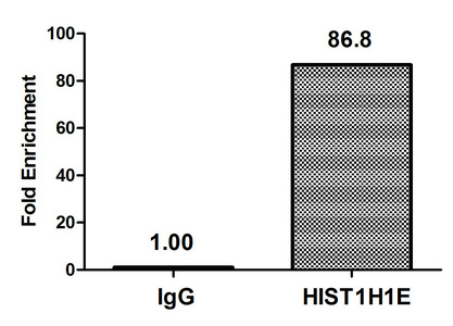 Chromatin Immunoprecipitation(ChIP) - Acetyl-HIST1H1E (K51) Antibody