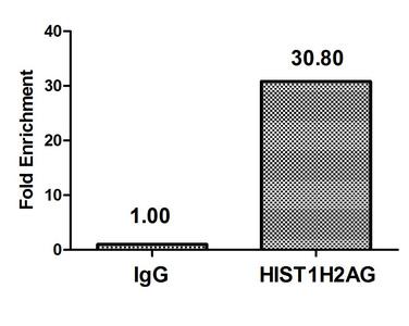Chromatin Immunoprecipitation(ChIP) - Mono-methyl-HIST1H2AG (K9) Antibody