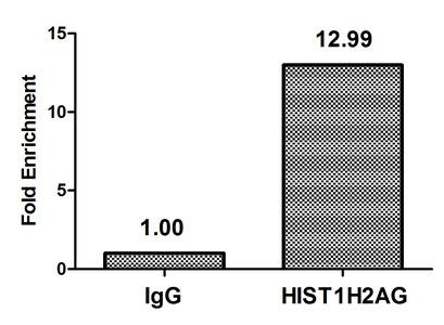 Chromatin Immunoprecipitation(ChIP) - HIST1H2AG (Ab-9) Antibody