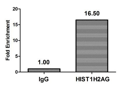 Chromatin Immunoprecipitation(ChIP) - Di-methyl-HIST1H2AG (R29) Antibody