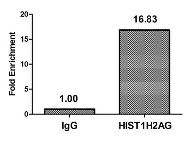 Chromatin Immunoprecipitation(ChIP) - Crotonyl-HIST1H2AG (K118) Antibody