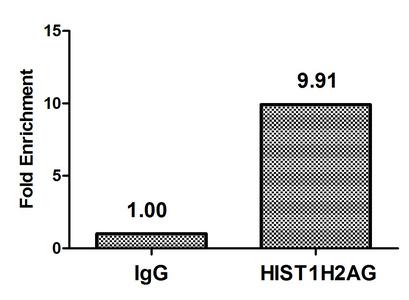 Chromatin Immunoprecipitation(ChIP) - Crotonyl-HIST1H2AG (K125) Antibody